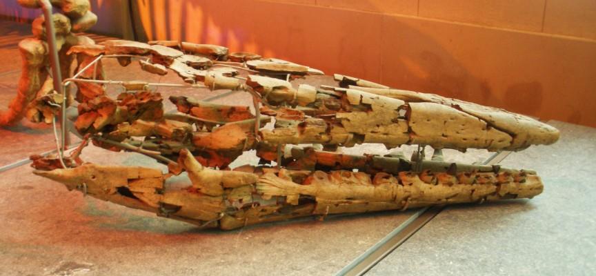 Une partie du squelette du Hainausaure, aujourd'hui au Musée d'Histoire Naturelle de Belgique.