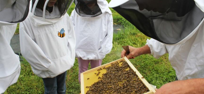 La ruche, sensibilisation des jeunes au rôle des abeilles