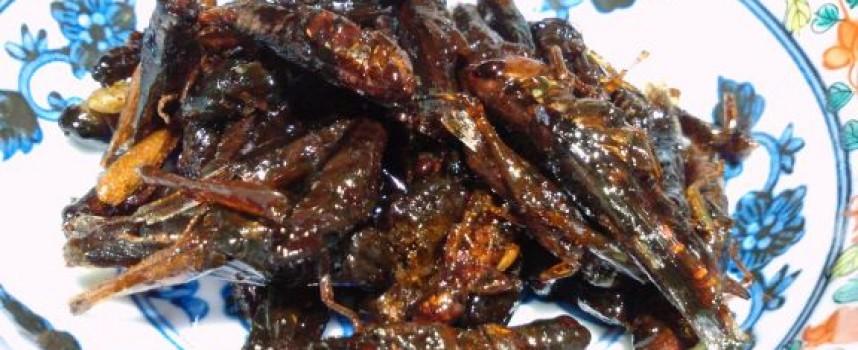 Des insectes dans notre assiette ?