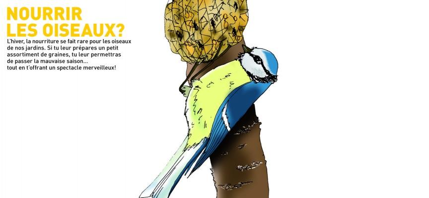 Petits conseils pour nourrir les oiseaux.