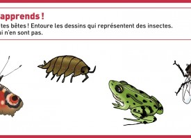 Peux-tu reconnaître les insectes ?
