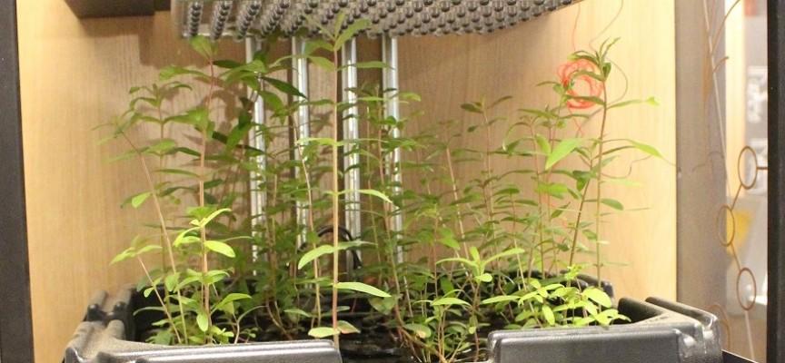 Des plantes qui permettent d'allumer des lampes...