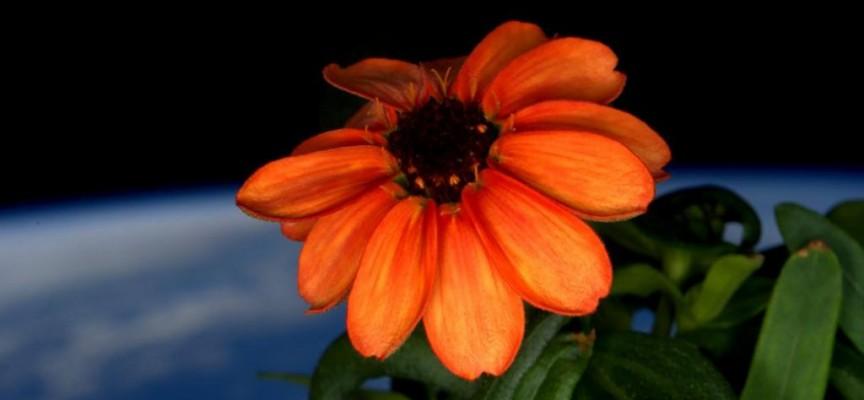Scott Kelly a photographié sa première fleur.