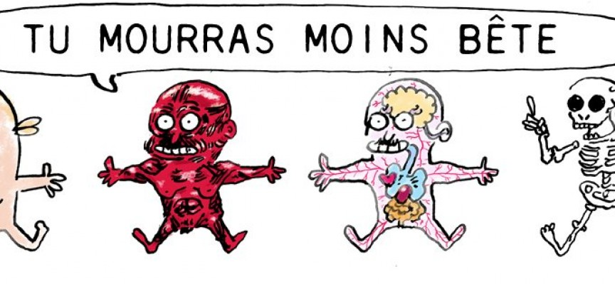 Tu mourras moins bête [mais tu mourras quand même] : La BD qui vulgarise les sciences avec humour et dérision! Une oeuvre signée Marion Montaigne.