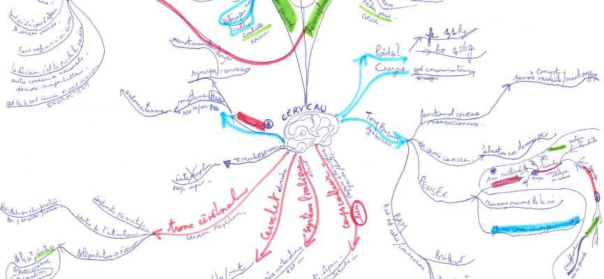 Ma première carte mentale, réalisée au départ d'un exposé sur le cerveau.