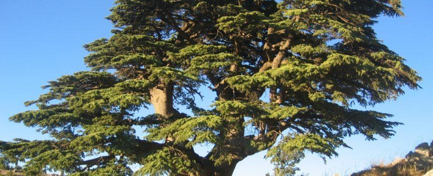 Les arbres recensés pour la première fois