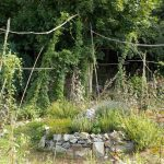jardinage biologique