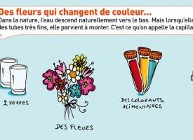Crée des fleurs qui changent de couleur