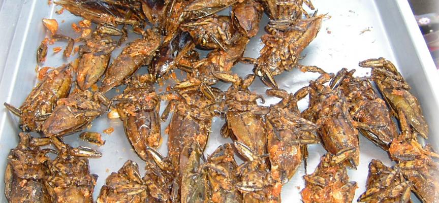 Une petite assiette d'insectes frits ?