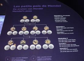 Johann Mendel : hérédité et petits pois