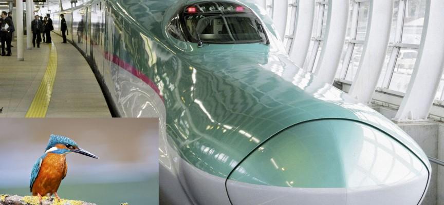 Entre le TGV japonais et le martin-pêcheur, plus d'un point commun...