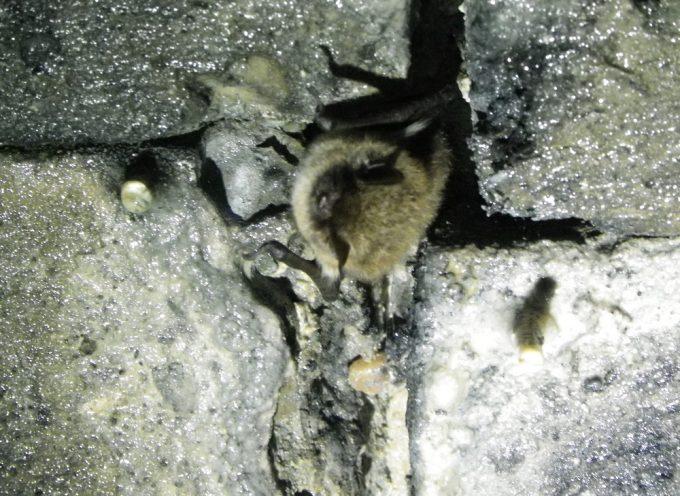Sur les traces des chauves-souris