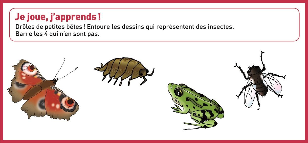 peux tu reconna tre les insectes sciences et soci t. Black Bedroom Furniture Sets. Home Design Ideas
