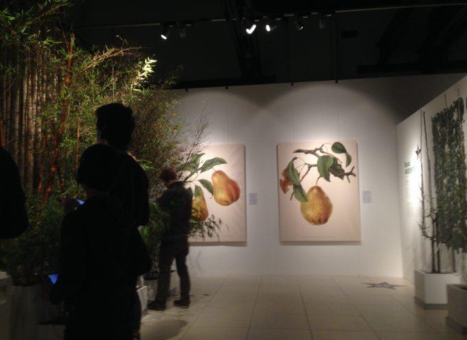 Histoires de poires et de bambous