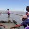 Le concombre de mer, porteur de grandes espérances
