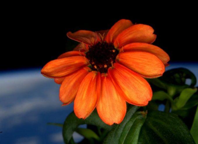 Une fleur dans l'espace