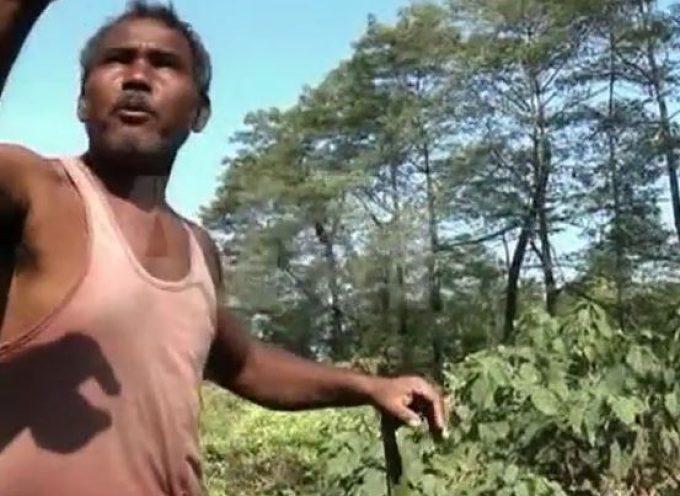 L'homme qui plantait des arbres…en Inde