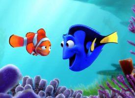 """Le """"Monde de Dory"""", une menace pour les poissons chirurgiens ?"""