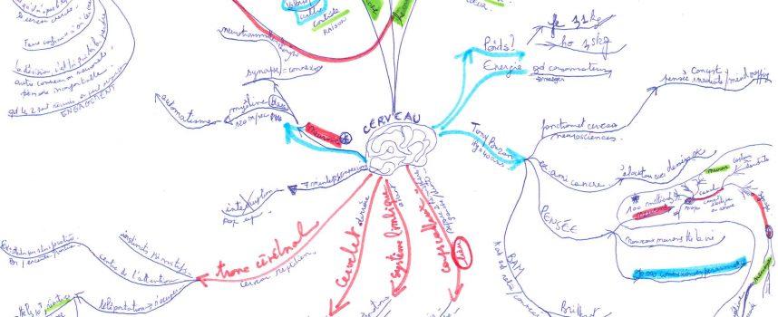 Le mindmapping comme outil d'apprentissage