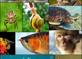 L'histoire du vivant par la classification phylogénétique