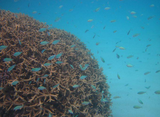 Expédition Tara, découvrir les sciences via l'océan