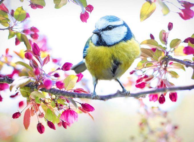 3 raisons d'aider les oiseaux, et comment faire !