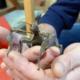 Nouveaux locataires au Pass : des phasmes scorpions